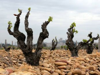 vineyards-rhone-valley_9136_600x450